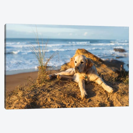Nala Canvas Print #LNZ168} by Sergio Lanza Art Print