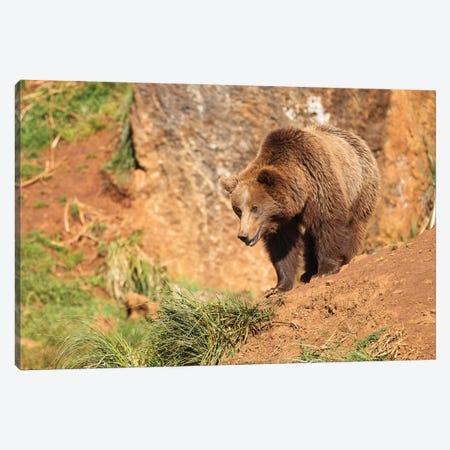 The Bear Canvas Print #LNZ208} by Sergio Lanza Canvas Artwork