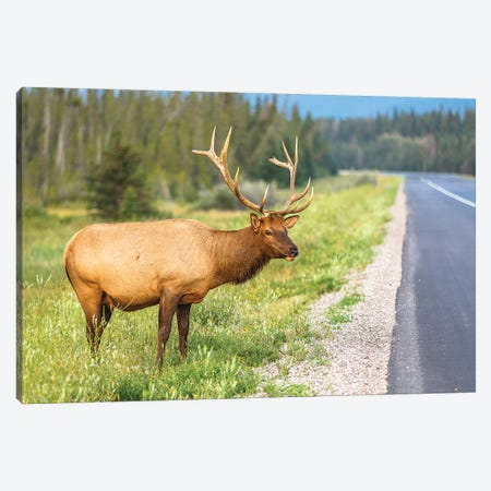 The Elk Canvas Print #LNZ212} by Sergio Lanza Canvas Print