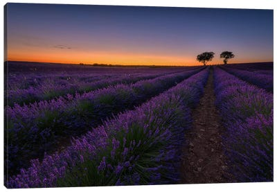 Lavender Lines Canvas Art Print