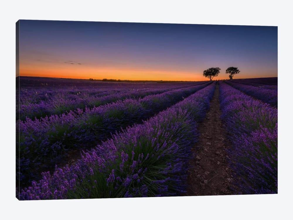 Lavender Lines by Sergio Lanza 1-piece Canvas Art Print