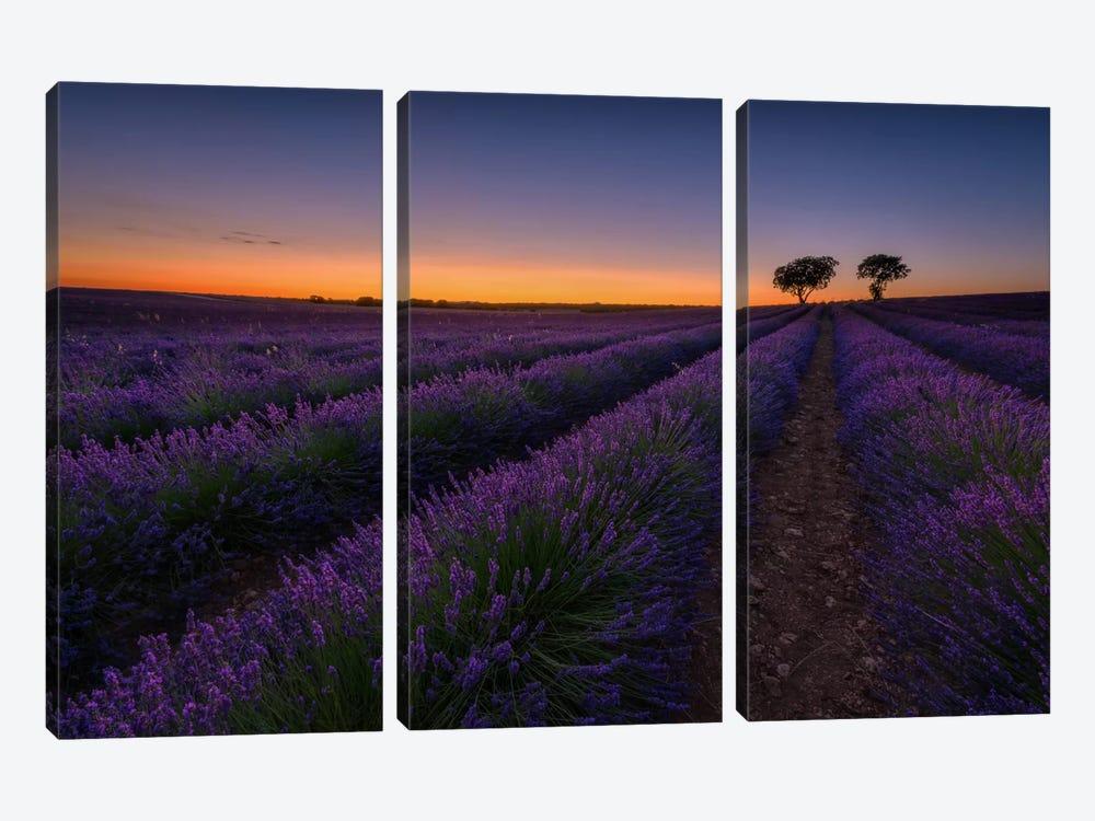 Lavender Lines by Sergio Lanza 3-piece Canvas Art Print