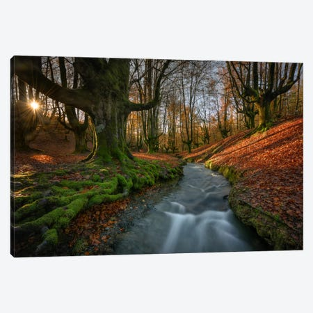 Magical Forest Canvas Print #LNZ23} by Sergio Lanza Canvas Art Print