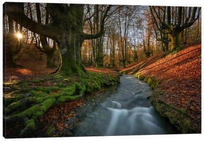 Magical Forest Canvas Art Print