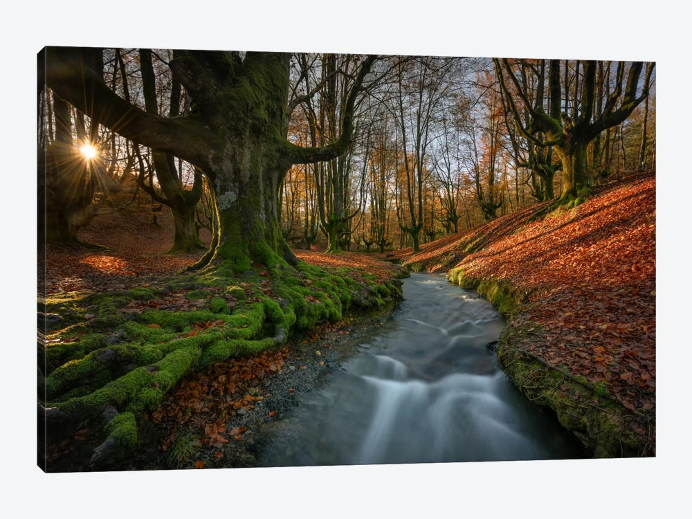 Magical Forest by Sergio Lanza 1-piece Art Print