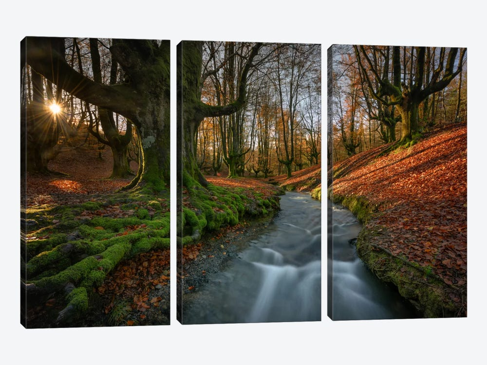 Magical Forest by Sergio Lanza 3-piece Art Print