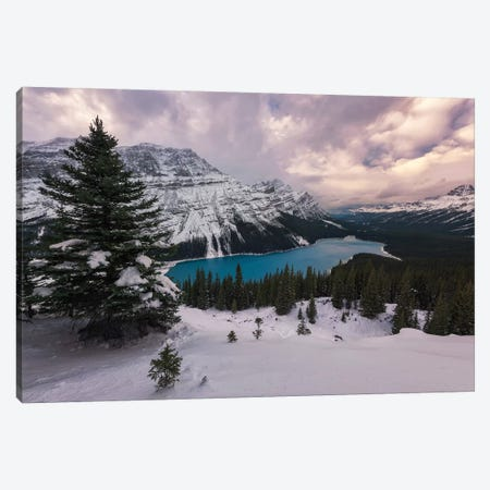 Alberta's Winters Canvas Print #LNZ69} by Sergio Lanza Canvas Print