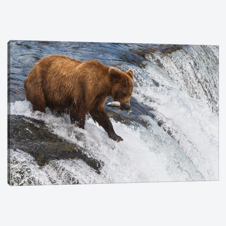 Brooks Falls Canvas Print #LNZ91} by Sergio Lanza Canvas Art