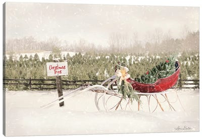 Red Sleigh at Tree Farm Canvas Art Print