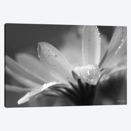 Daisy Canvas Print #LOD144} by Lori Deiter Canvas Artwork