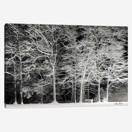 Snowy Trees Canvas Print #LOD161} by Lori Deiter Canvas Print