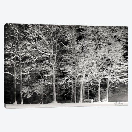 Snowy Trees Canvas Print #LOD161} by Lori Deiter Canvas Print