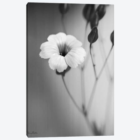 Blossoming Soul   Canvas Print #LOD167} by Lori Deiter Canvas Art