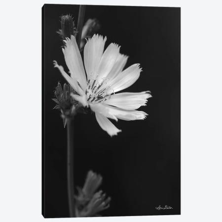 Flower Petal Wishes  Canvas Print #LOD178} by Lori Deiter Canvas Artwork