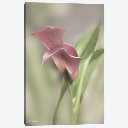 Pink Calla Lily Canvas Print #LOD191} by Lori Deiter Canvas Wall Art