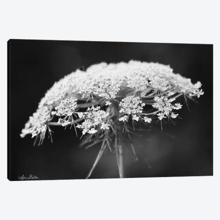 Queen Anne's Lace Canvas Print #LOD192} by Lori Deiter Canvas Artwork
