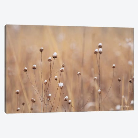 Snow Capped Wildflowers 3-Piece Canvas #LOD197} by Lori Deiter Canvas Print