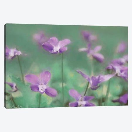 Wild Violets Canvas Print #LOD210} by Lori Deiter Art Print
