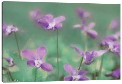 Wild Violets Canvas Art Print