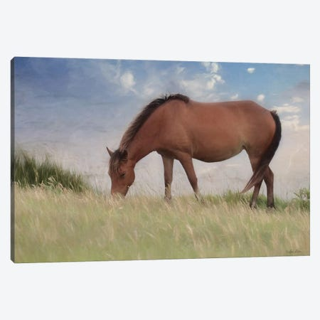Assataegue Horse Canvas Print #LOD300} by Lori Deiter Art Print
