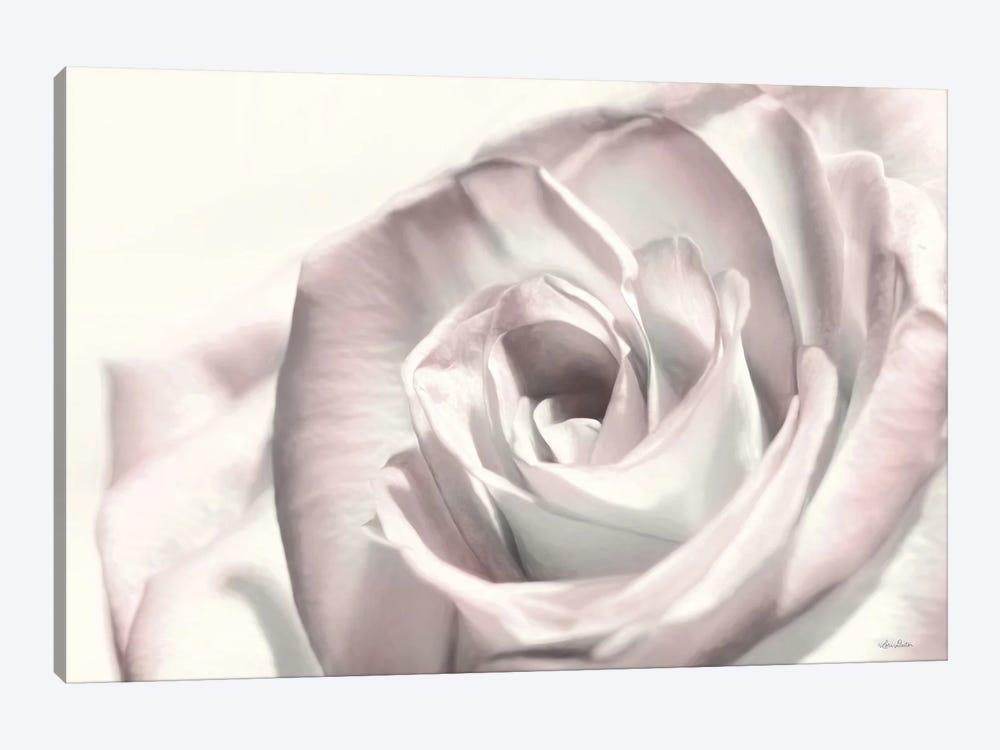 Blush Rose I by Lori Deiter 1-piece Canvas Art Print
