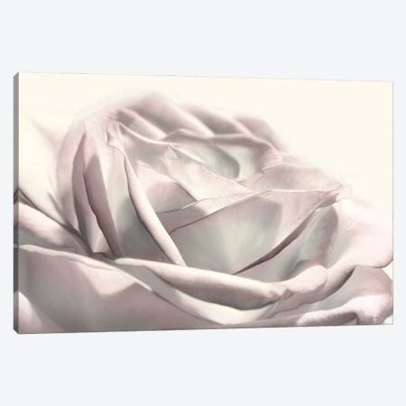 Blush Rose II Canvas Print #LOD333} by Lori Deiter Canvas Wall Art