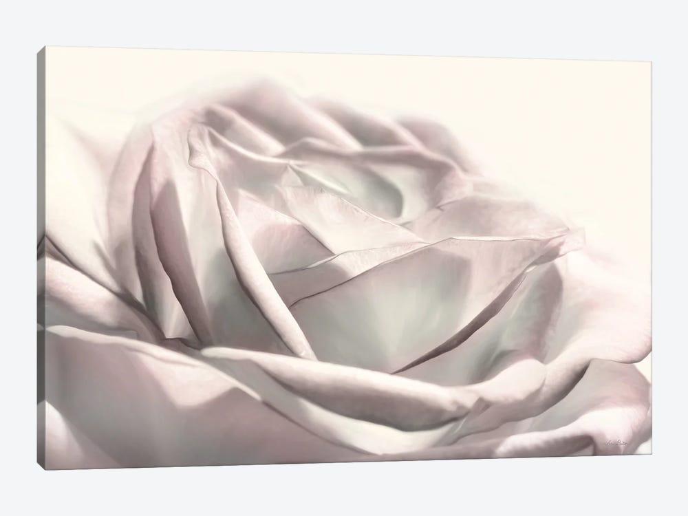 Blush Rose II by Lori Deiter 1-piece Canvas Wall Art