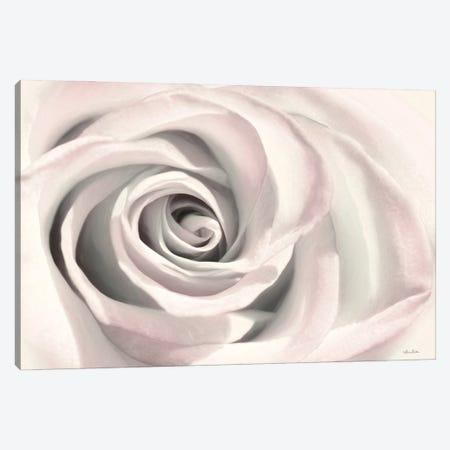 Blush Rose III Canvas Print #LOD334} by Lori Deiter Canvas Art Print
