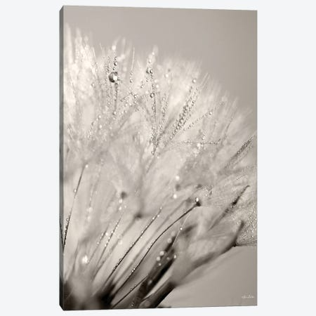 Dandelion Jewels I Canvas Print #LOD335} by Lori Deiter Canvas Print
