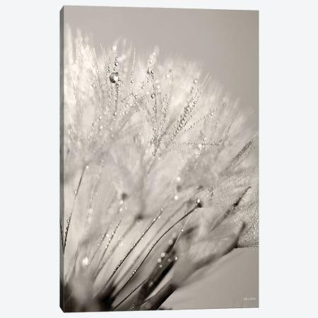 Dandelion Jewels I Canvas Print #LOD335} by Lori Deiter Canvas Print