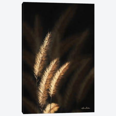 Golden Grass III 3-Piece Canvas #LOD33} by Lori Deiter Art Print