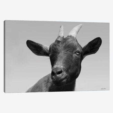 Lake Tobias Goat I 3-Piece Canvas #LOD340} by Lori Deiter Canvas Print