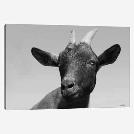 Lake Tobias Goat I Canvas Print #LOD340} by Lori Deiter Canvas Print