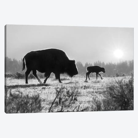 Lamar Valley Migration Canvas Print #LOD341} by Lori Deiter Canvas Art Print