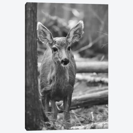 Rocky Mountains Deer 3-Piece Canvas #LOD342} by Lori Deiter Canvas Art Print