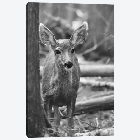 Rocky Mountains Deer Canvas Print #LOD342} by Lori Deiter Canvas Art Print
