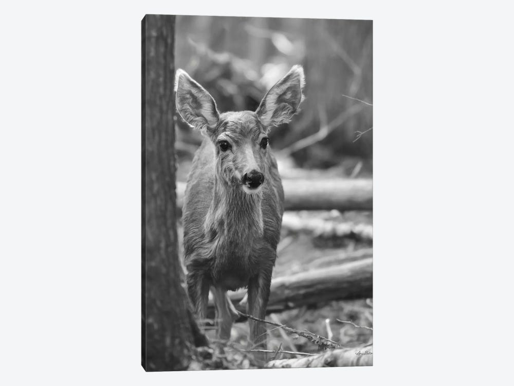 Rocky Mountains Deer by Lori Deiter 1-piece Canvas Art