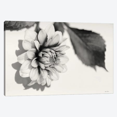 White Dahlia I Canvas Print #LOD348} by Lori Deiter Art Print