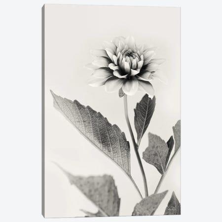 White Dahlia II Canvas Print #LOD349} by Lori Deiter Canvas Art Print