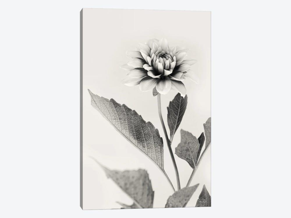 White Dahlia II by Lori Deiter 1-piece Art Print