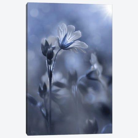 Blue & White Flowers I Canvas Print #LOD360} by Lori Deiter Canvas Print