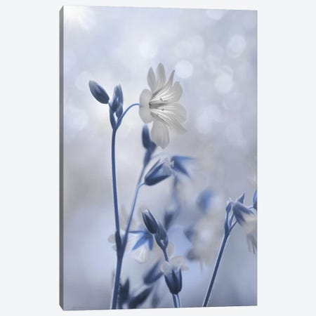 Blue & White Flowers II Canvas Print #LOD361} by Lori Deiter Art Print