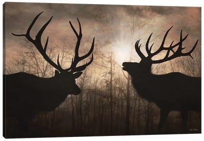 Elk Sunrise III Canvas Art Print