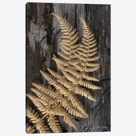 Natural Gold Fern Canvas Print #LOD46} by Lori Deiter Canvas Art Print
