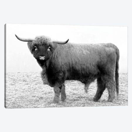 Scotty the Bull Canvas Print #LOD53} by Lori Deiter Canvas Art Print