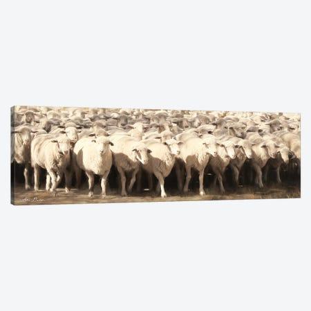 Sheep Herding Canvas Print #LOD55} by Lori Deiter Canvas Artwork