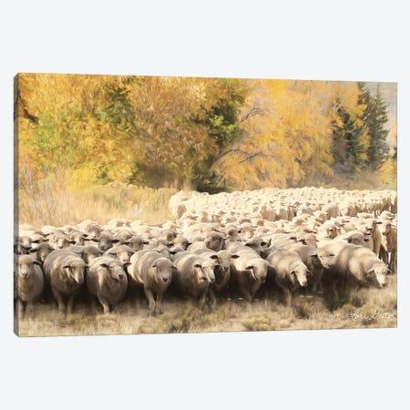 Sheep Ranch Canvas Print #LOD56} by Lori Deiter Canvas Art