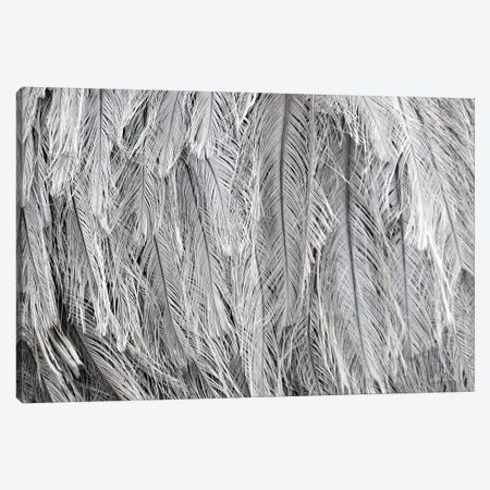 Silver Feathers Canvas Print #LOD57} by Lori Deiter Canvas Art