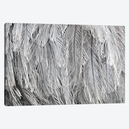 Silver Feathers Canvas Print #LOD57} by Lori Deiter Canvas Art