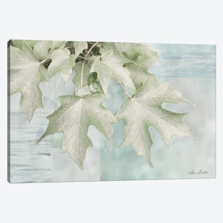 The Maple Leaves Canvas Print #LOD67} by Lori Deiter Canvas Art Print